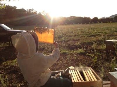 Un retour à l'emploi favorisé par l'apiculture